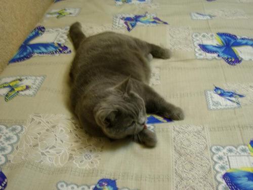 Кот и постель
