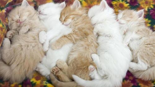 Спят котятки)))