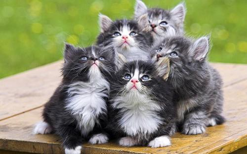Компашка котят