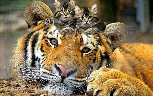 Кошки, они и есть кошки, какая разница- большие или маленькие!